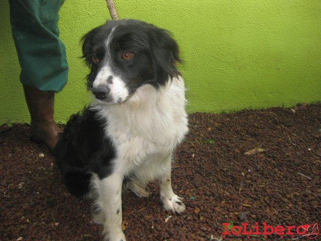 Cani Di Taglia Piccola Media E Grande Foto 33 40 Ecoo ...