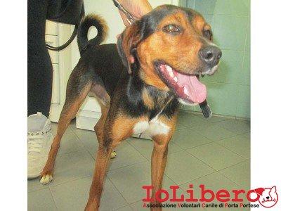 cane trovato il 8.6.14 in Casalotti no mchp Marcheggiani 3398866480