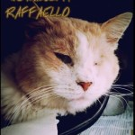 raffaello1