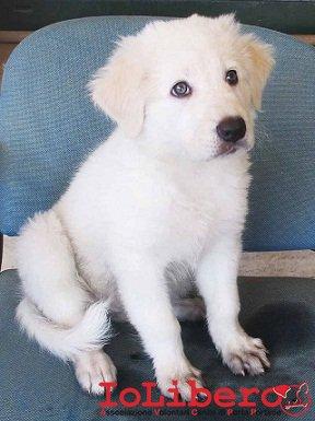 cucciolo matr. 769.15
