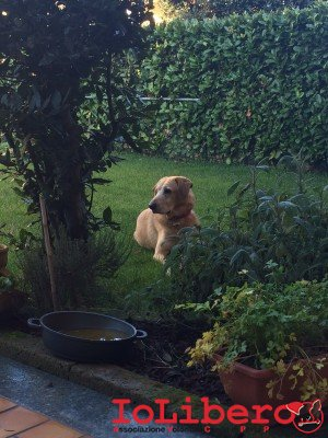 E' fantastico, Bartolomeo è il cane che è entrato nel nostro cuore