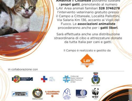 """""""SUL CAMPO PER LORO"""": importante iniziativa per i gatti di Accumuli, Amatrice e Cittareale"""