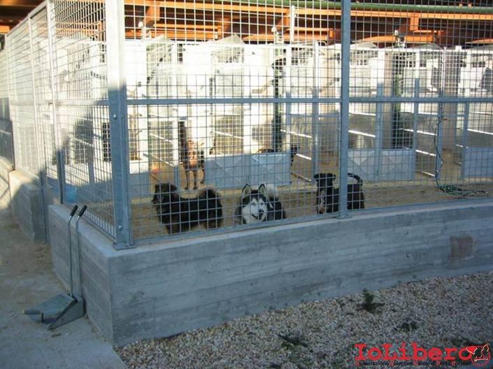 Adozioni cani canili di roma avcpp iolibero for Costruire box per cani