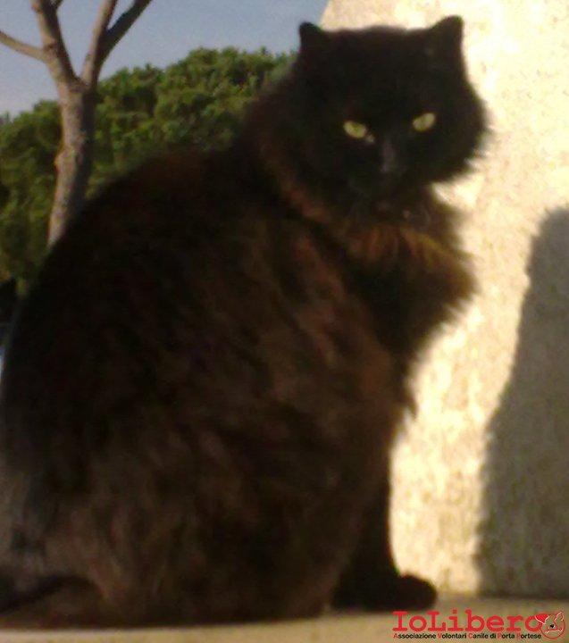 Ritrovato 24042011 Hose Gatto Incrocio Persiano A Pelo Lungo