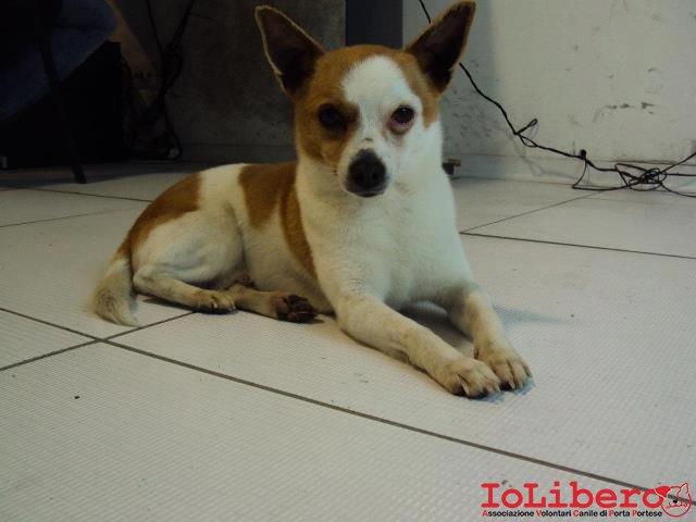 Super Rintracciati i proprietari! 25/05/2012 cane maschio incrocio  NN06