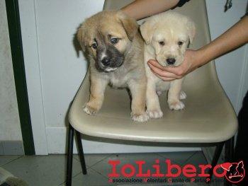 cuccioli in stanza 210