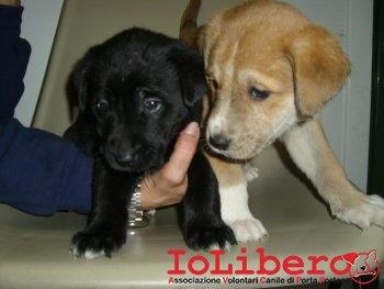 cuccioli in stanza 210_1