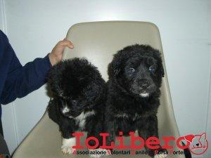 cuccioli in stanza 210_2