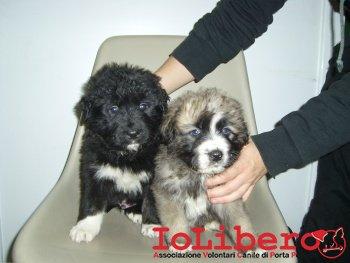 cuccioli in stanza 210_3