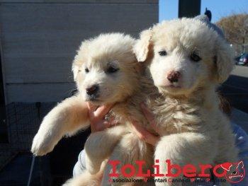 Cuccioli corridoio Maida_1