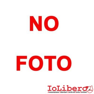 nofoto