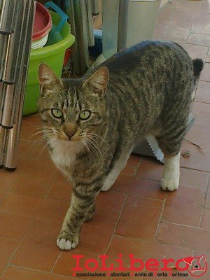 gatti 097
