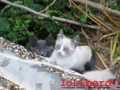 gattini1