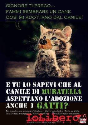 gatto-prega-a31