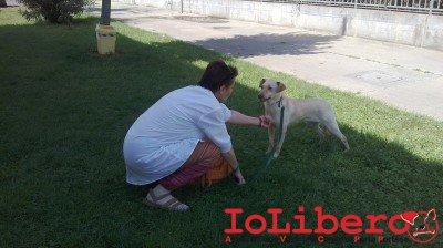 lisa_adottata (10)