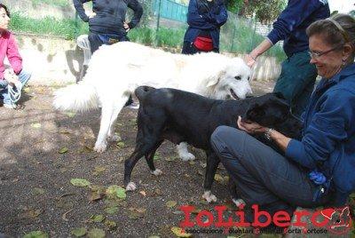 FOSCA_2013 nov 12