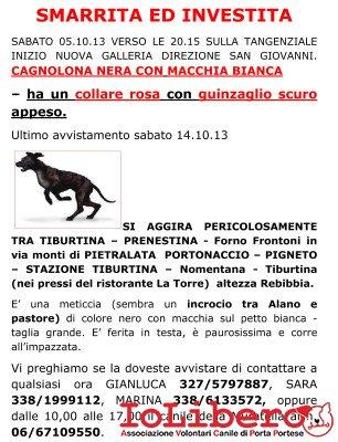 locandina cane investito tangenziale (1)
