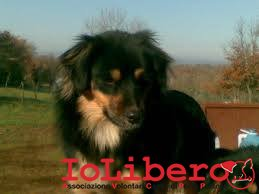foto indicativa del cane avvistato