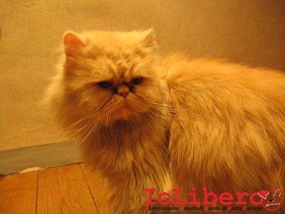 Immagine gatti - gattina trovatella 019