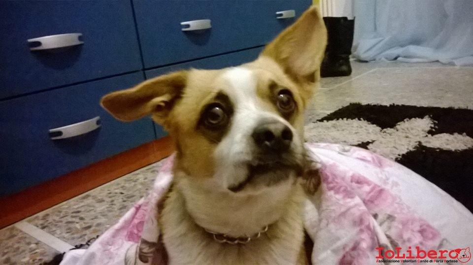 Rintracciato il proprietario 14 01 2014 trovato cane for Cercasi ufficio roma
