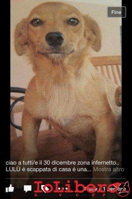infernetto1