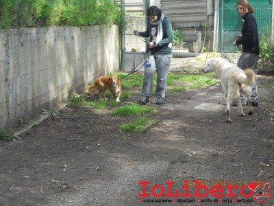 15-prove compatibilita - risotto e cagnolino in cerca di fratellone