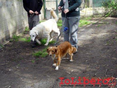 16-prove compatibilita - risotto e cagnolino in cerca di fratellone2