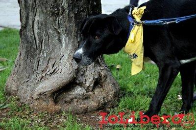 CALIMERO_2014 io cane di canile 1