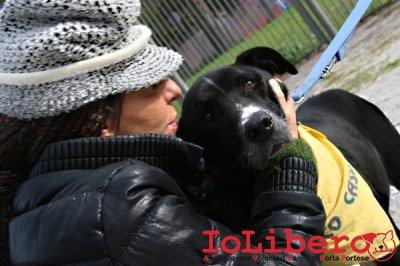 CALIMERO_2014 io cane di canile 10