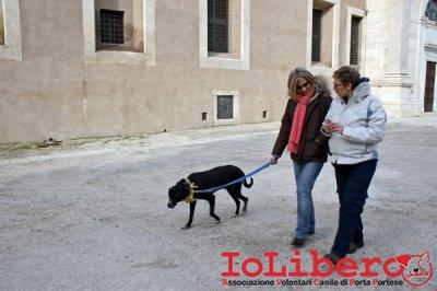 CALIMERO_2014 io cane di canile 11