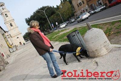 CALIMERO_2014 io cane di canile 12