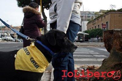 CALIMERO_2014 io cane di canile 14
