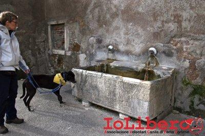 CALIMERO_2014 io cane di canile 18