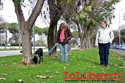 CALIMERO_2014 io cane di canile 2
