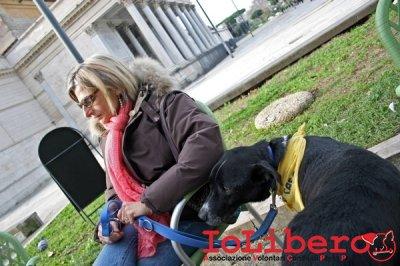 CALIMERO_2014 io cane di canile 20