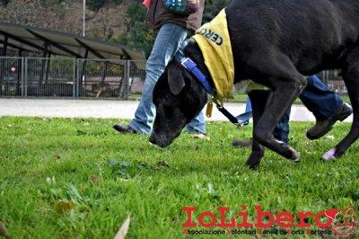 CALIMERO_2014 io cane di canile 22