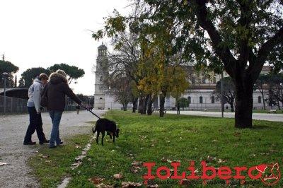CALIMERO_2014 io cane di canile 3