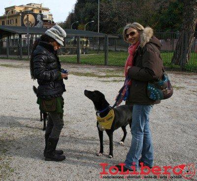 CALIMERO_2014 io cane di canile 4