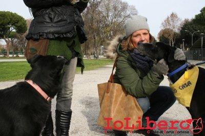 CALIMERO_2014 io cane di canile 6