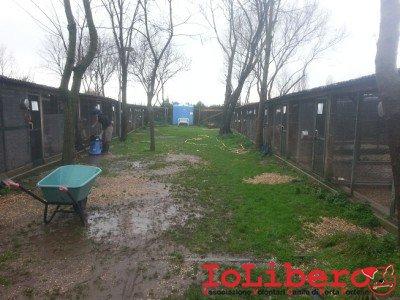 Parco canile Vitinia ex Poverello il 1 febbraio 2014