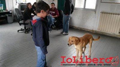 SABBIA_adozione 2