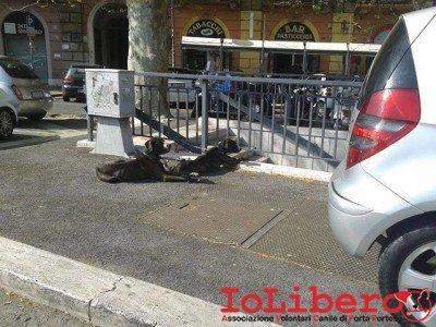 cani_porta_pia_liberazione3