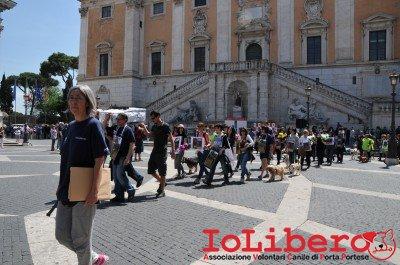 manifestazione10maggio14_0045