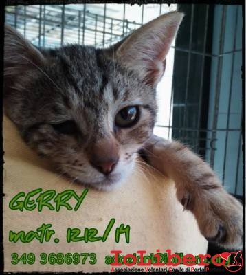 gerry 1