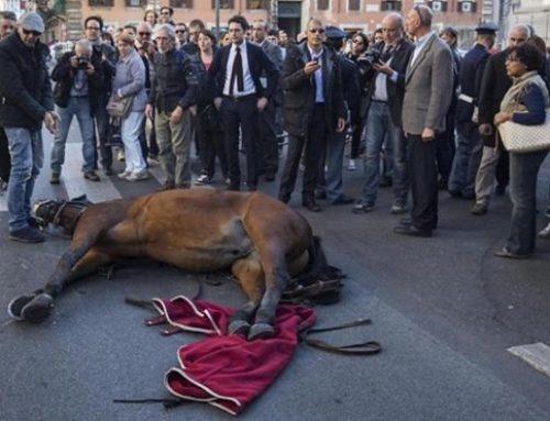 Botticelle a Roma: noi ci vergogniamo