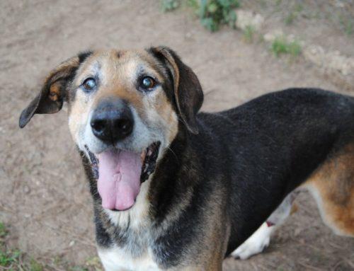 ADOTTATO – TEO, un bravo cane che ricorda la sua perduta libertà. NUOVE FOTO