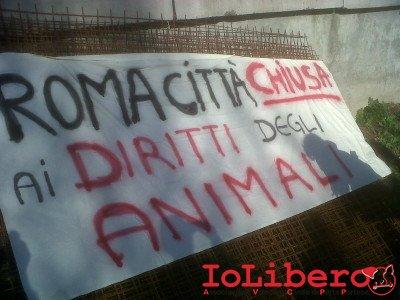 Roma-20121124-00054