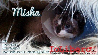 misha1