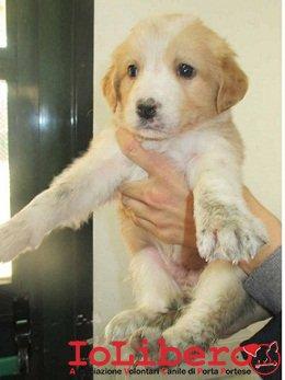 matr. 185.15 cucciola