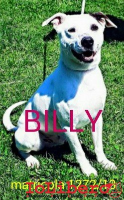 BILLY BORGHESE